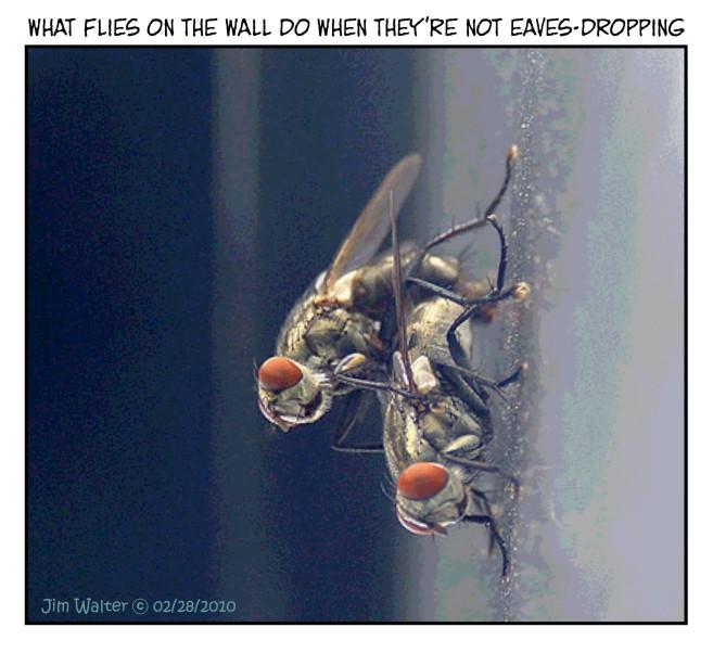 100226 - Off-duty wall-flies