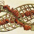 Moebius band