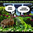 160417 - Garden life